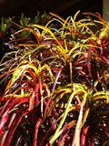 Kleurrijk Bush in Peru Stock Afbeeldingen