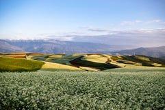 Kleurrijk cole land Stock Afbeeldingen
