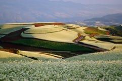 Kleurrijk cole land Stock Afbeelding