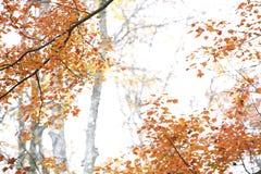 Kleurrijk Dalingsgebladerte Stock Afbeeldingen
