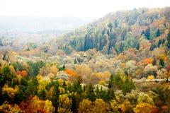 Kleurrijk de herfst boslandschap, geweven achtergrond Stock Afbeeldingen
