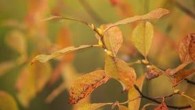 Kleurrijk de herfstbeeld met de bladgouden Royalty-vrije Stock Foto's