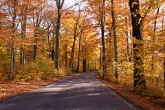 Kleurrijk de herfstbos Royalty-vrije Stock Foto's