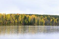 Kleurrijk de herfstbos bij meerkust Stock Foto's