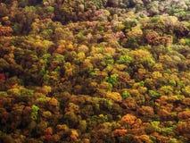 Kleurrijk de herfstbos stock fotografie