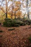 Kleurrijk de herfstbos met rotsen en gevallen bladeren in Mannelijke Karpaty mounttains in Slowakije stock foto's