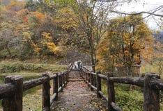 Kleurrijk de herfstbos van Erlangshan-berg, in Yana, Sichuan royalty-vrije stock foto's