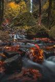 Kleurrijk de herfstlandschap bij een kreek van Oregon stock afbeeldingen