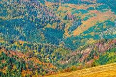 Kleurrijk de herfstlandschap van de de Vogezen-Bergen in de Elzas, Frankrijk stock afbeelding
