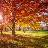 Kleurrijk de herfstpark royalty-vrije stock foto