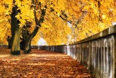 Kleurrijk de herfstpark Royalty-vrije Stock Afbeelding