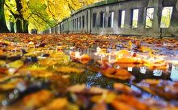 Kleurrijk de herfstpark Stock Foto's
