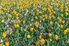 Kleurrijk de lentegazon met mengeling van bloemen in tuin stock foto