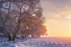 Kleurrijk de winterlandschap Sneeuwbomen in warm zonlicht Verbazende de winteraard Roze zonneschijn in de winter ijzig park royalty-vrije stock fotografie