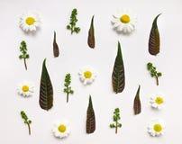 Kleurrijk de zomerpatroon met bladeren en bloemen Royalty-vrije Stock Afbeelding