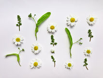 Kleurrijk de zomerpatroon met kruiden en bloemen Vlak leg op witte lijst Stock Foto's