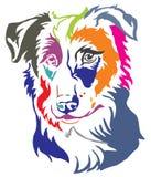 Kleurrijk decoratief portret van de vector van Hondborder collie illustr stock illustratie