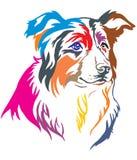 Kleurrijk decoratief portret van vectorillustratio van Border collie stock illustratie