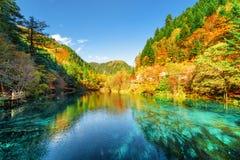 Kleurrijk die de herfstbos in het Vijf Bloemmeer wordt weerspiegeld stock foto's