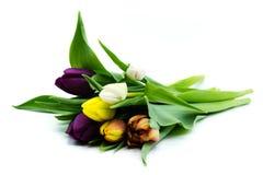 kleurrijk die tulpenboeket op witte achtergrond wordt geïsoleerd stock afbeeldingen