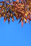 Kleurrijk doorbladert Royalty-vrije Stock Foto's