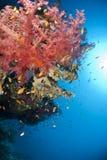 Kleurrijk en trillend tropisch zacht koraalrif. Stock Foto's
