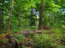 Kleurrijk Forest Day Stock Afbeelding