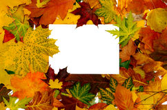 Kleurrijk frame van gevallen de herfstbladeren Royalty-vrije Stock Foto's