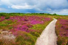 Kleurrijk gebiedslandschap Royalty-vrije Stock Foto's