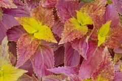 Kleurrijk Gebladerte Royalty-vrije Stock Foto