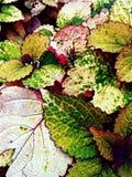 Kleurrijk Gebladerte Royalty-vrije Stock Afbeeldingen
