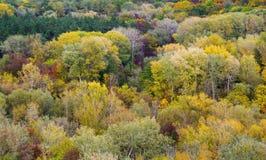 Kleurrijk gebladerte in de herfst Royalty-vrije Stock Fotografie