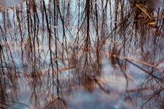 Kleurrijk gebladerte die in het donkere dalingswater drijven met bezinning van de bomen. Royalty-vrije Stock Foto's