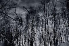 Kleurrijk gebladerte die in het donkere dalingswater drijven met bezinning van de bomen. Stock Fotografie