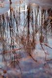 Kleurrijk gebladerte die in het donkere dalingswater drijven met bezinning van de bomen. Royalty-vrije Stock Fotografie