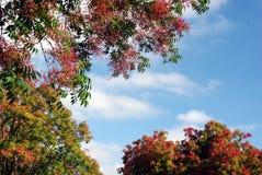 Kleurrijk gebladerte en blauwe hemel royalty-vrije stock foto's