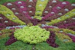 Kleurrijk gebladerte in formele tuin Stock Fotografie