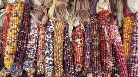 Kleurrijk graan van een landbouwbedrijf stock foto