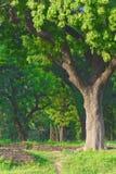 Kleurrijk groen bos Stock Afbeelding