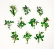 Kleurrijk helder patroon van wilde weidebloemen op witte achtergrond stock foto's