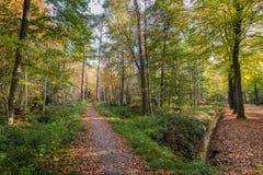 Kleurrijk herfstbos Stock Afbeeldingen