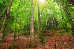 Kleurrijk herfstbos in het mythische Onderstel Olympus - Griekenland stock fotografie