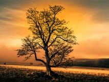 Kleurrijk herfstlandschap na regen met mooie boom, mist en blauwe hemel Dramatische avondscène in zonsondergangtijd Stock Afbeeldingen
