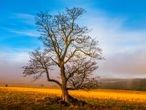 Kleurrijk herfstlandschap na regen met mooie boom, mist en blauwe hemel Dramatische scène Stock Foto