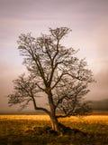 Kleurrijk herfstlandschap na regen met mooie boom, mist en blauwe hemel Dramatische scène Stock Afbeelding