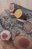 Kleurrijk hout Stock Fotografie