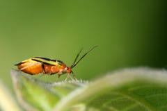 Kleurrijk Insect Royalty-vrije Stock Afbeeldingen