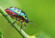 Kleurrijk Insect Stock Fotografie