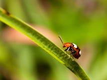 Kleurrijk insect op een lang groen gras royalty-vrije stock afbeeldingen