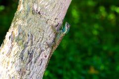 Kleurrijk Kameleon op de boom Stock Fotografie